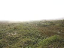 Strong fog in the tundra, Soroya Island, Norway stock video
