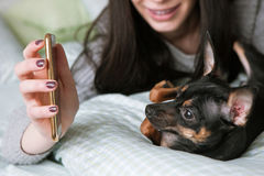 Strong friendship with small dog. Toy Terrier and unrecognizable woman, girl show to puppy picture on her mobile phone. Modern social media background stock photo