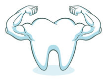 Strong healthy tooth Royalty Free Stock Image