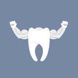 Strong healthy tooth. White clean tooth with big muscles. Logo f Royalty Free Stock Photos