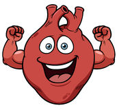 Strong heart cartoon. Vector illustration of Strong heart cartoon Stock Images