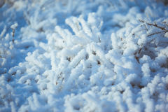Strong icy grass with ice crystals Royalty Free Stock Photo
