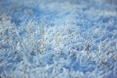 Strong icy grass with ice crystals Royalty Free Stock Photos