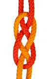Strong knot. Tied by a rope isolated on a white background Stock Image