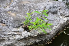 Plants from stone. A strong life,plant from the stone royalty free stock photos