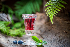 Strong liqueur with blueberries and alcohol Stock Images