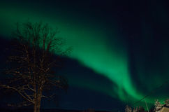 Strong majestic aurora borealis, northern light on sky Royalty Free Stock Images