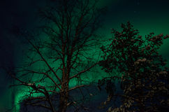 Strong majestic aurora borealis, northern light on sky. With trees Stock Image