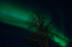Strong majestic aurora borealis, northern light on sky Stock Photos