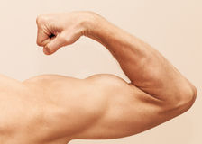 Strong male arm shows biceps royalty free stock photo