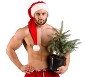 Strong man dressed as Santa Claus with a pot with New Year tree in his hand and red hat, isolated over white background stock photo