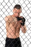 MMA fighter isolated in white Stock Photo
