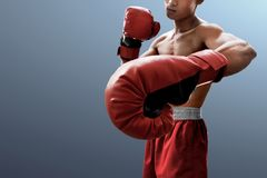 Strong muscular boxer on gray background stock photos