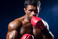 Strong muscular boxer in red boxing gloves on a blue background. A man in a boxing stand Royalty Free Stock Images