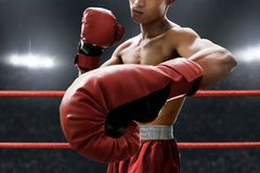 Strong muscular boxer on the ring royalty free stock photography