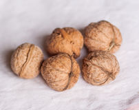 Strong nuts royalty free stock images