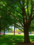 Strong Oak Royalty Free Stock Photos