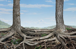 Strong Partnership. And foundation as a business concept of stability and loyalty with two trees with roots connected together as a symbol of agreement and Stock Image