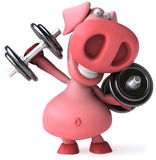 Strong pig Royalty Free Stock Image