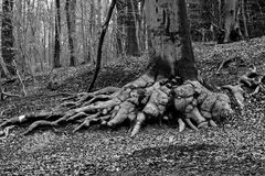 strong  roots Stock Photography