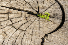 Strong seed growing on old cut down tree. Stock Photo