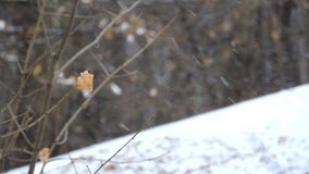 The strong snowfall in the forest. Branches and leaves sway in the wind. 1 stock video footage