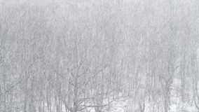 Strong snowfall over oak and birch trees. Above view of strong snowfall over oak and birch trees in forest stock footage