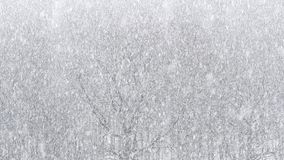 Strong snowfall over oak and birch trees. Above view of strong snowfall over oak and birch trees in forest stock video footage