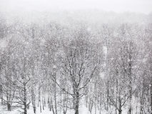 Strong snowing over woods in winter Royalty Free Stock Images