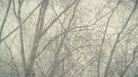 Strong snowstorm 1. Strong snowstorm. The branches of trees swaying under the influence of snow storm stock footage