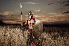 Strong Spartan warrior in battle dress with a shield and a spear stock images