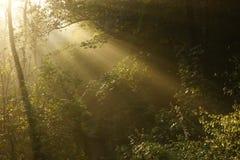 Strong sun rays through tall Stock Photography