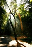 Strong sunbeams penetrating forest Royalty Free Stock Photos
