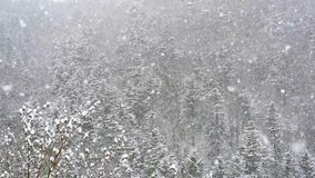 A big snowstorm is blowing in the wind. It is snowing in the autumn evening against the background of the forest slow