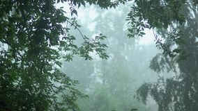 Strong gusts of swaying green trees in the pouring rain, a storm warning. Strong torrential rain, rainwater streams reduce visibility, tree branches are stock video footage