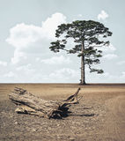 Strong tree Stock Image