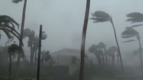 Strong tropical hurricane breaks trees, in the epicenter of the elements. Strong stock video