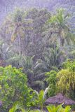 Strong tropical rain in the Seychelles Stock Images