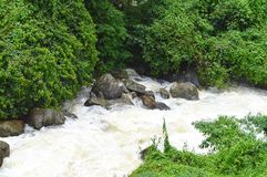 Strong Water Current Flowing through Green Forest and Stones - Natural Landscape Wallpaper. This is a photograph containing flowing stream with foamy water Stock Photos