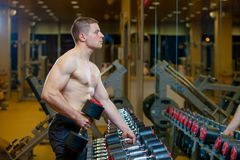 Strong well built bodybuilder lifting dumbbell weights getting ready for exercise in fitness Royalty Free Stock Photos