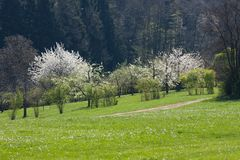 Appletree bloom in south germany Royalty Free Stock Images