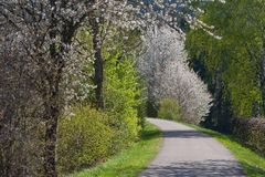 Appletree bloom in south germany. Strong white bloom on green fields on a sunny spring day in south germany countryside Stock Images