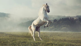 Strong white horse on the autumn meadow