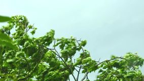 Strong wind blowing a tree stock video footage