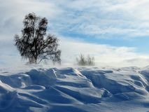 Snow drifting crept. Strong wind carries snow pozemku on steppe Royalty Free Stock Photo