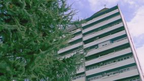 The strong wind moves the branches of the pine. With a building in the background stock video