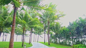 Strong wind shakes branches of high palms in tropical park stock footage