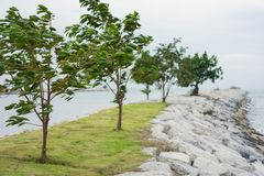 Strong winds blow the trees at the sea. Nature for summer concept royalty free stock photos