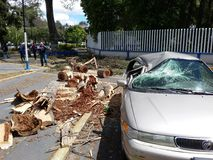Strong winds in Mexico. City cause accidents and have a death toll Royalty Free Stock Photos