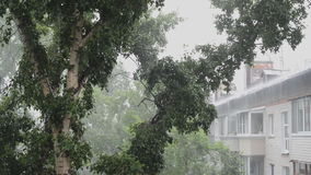 Strong winds and rain. Shook the trees stock footage
